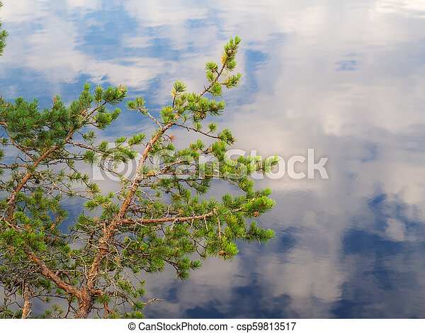 Pine branches against the background of water - csp59813517