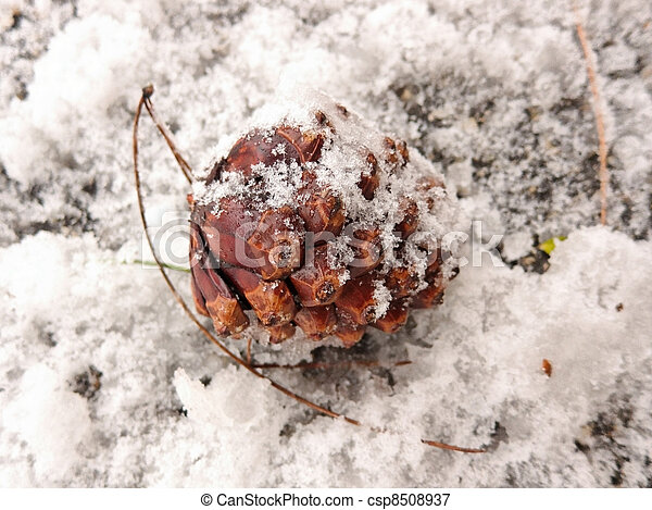 pine cone in the snow - csp8508937