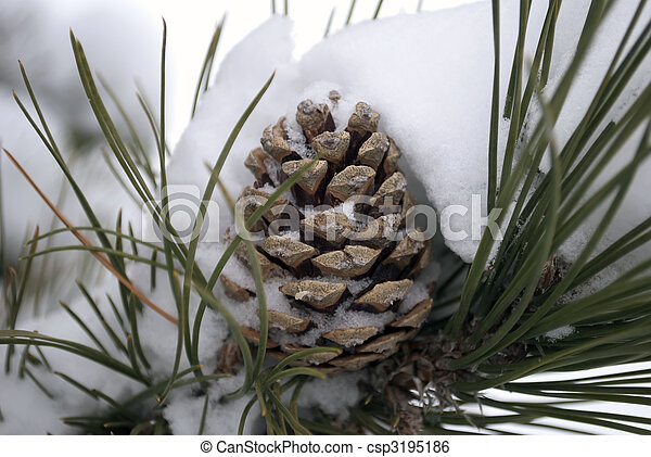 Pine Cone in the Snow - csp3195186