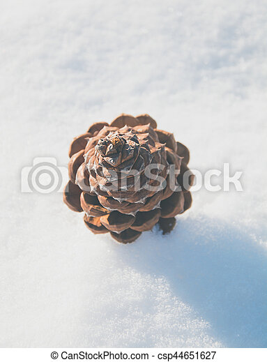 pine cone in the snow - csp44651627
