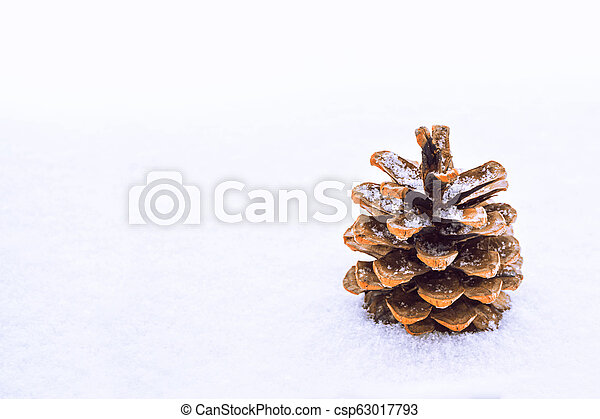 Pine cone in the snow. - csp63017793
