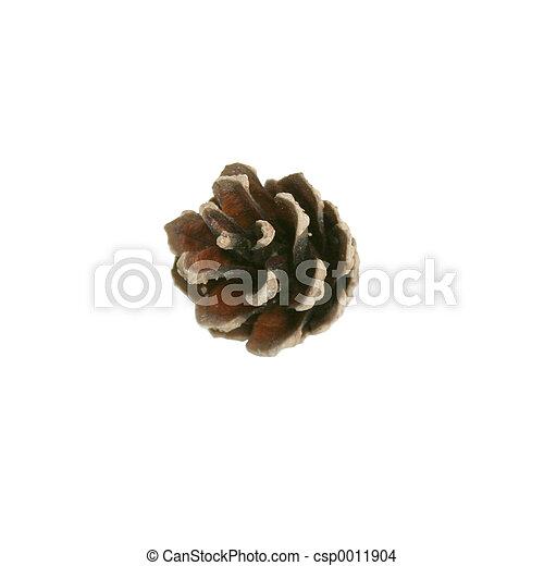 Pine Cone Isolated - csp0011904