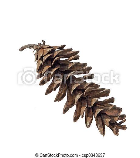 Pine Cone - csp0343637