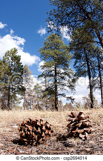 Pine cones on the forest floor. - csp2694014