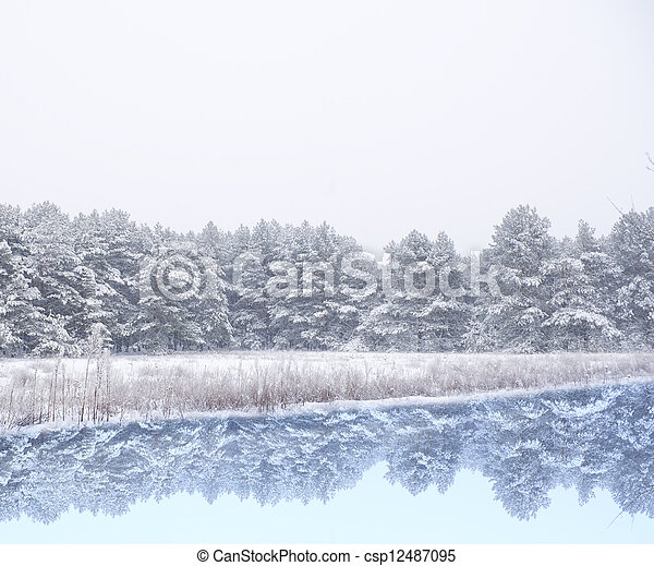 pine forest covered snow - csp12487095