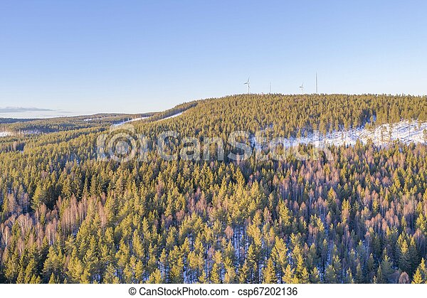 Pine forest in winter drone photo - csp67202136