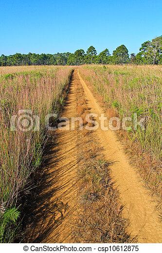 Pine forest - csp10612875