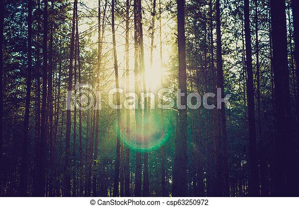 pine forest - csp63250972