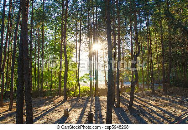 pine forest - csp59482681