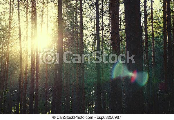 pine forest - csp63250987
