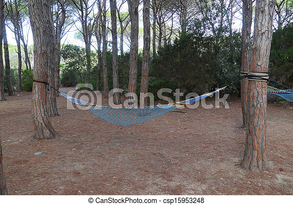 pine forest - csp15953248
