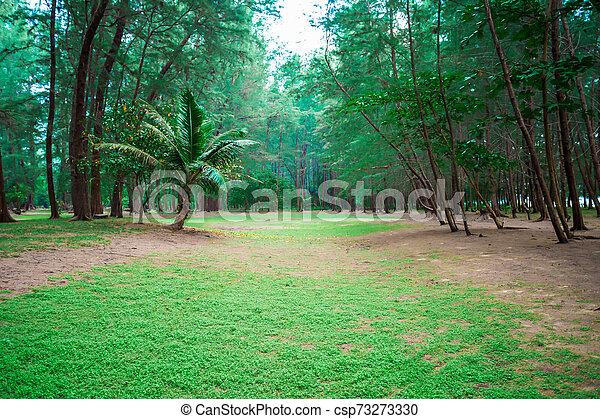 pine forest - csp73273330