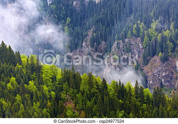 Pine forests on mountains - csp24977524