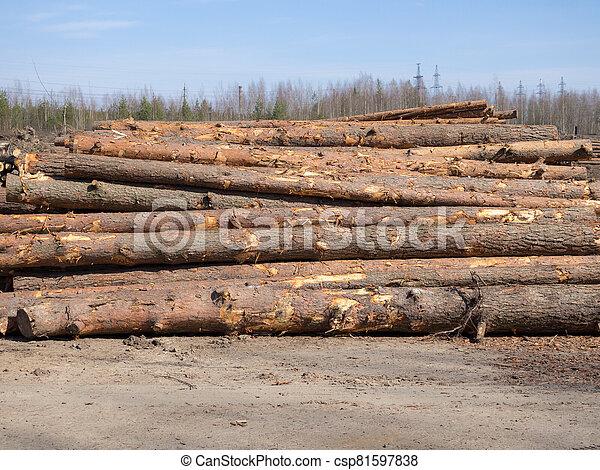 pine logs on the ground - csp81597838