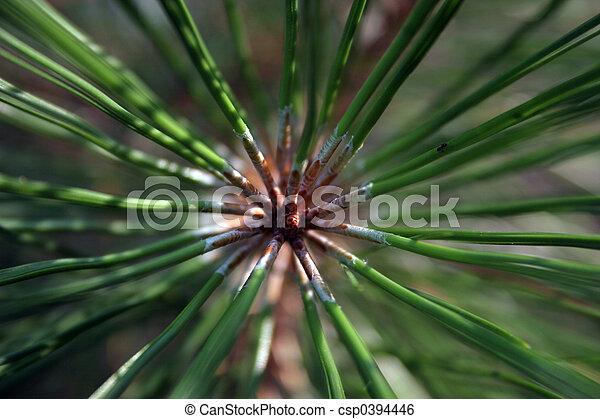 Pine needles on limb - csp0394446