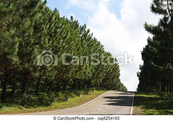 Pine Road - csp5254163