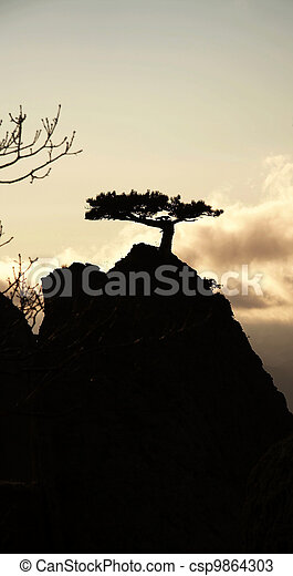 Pine silhouette on the rock - csp9864303