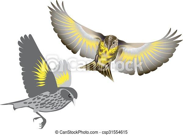 Pine siskin bird - csp31554615