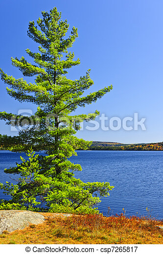 Pine tree at lake shore - csp7265817