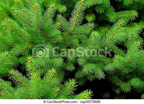 Pine tree background - csp30578688