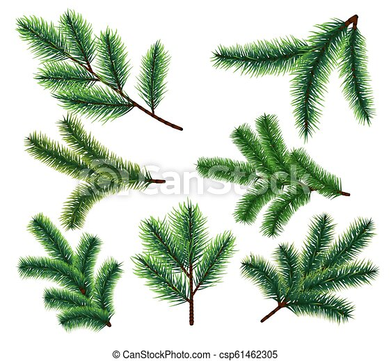 Christmas Branch Vector.Pine Tree Branches Christmas Fir Tree Branch Vector Xmas Decorarion Elements