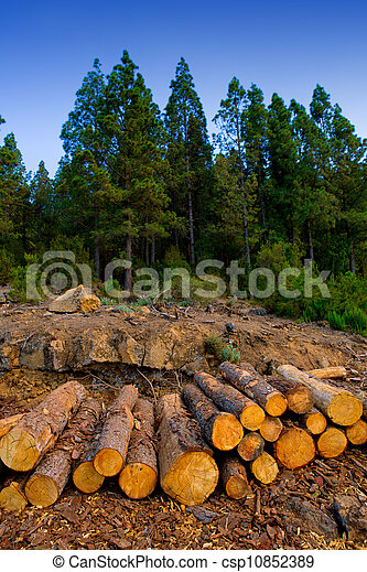 pine tree felled for timber industry in Tenerife - csp10852389