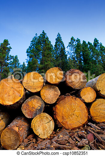 pine tree felled for timber industry in Tenerife - csp10852351