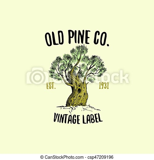 Pine Tree Logo Engraved Or Hand Drawn Isolated Old Looking Emblem For Ecology Camping
