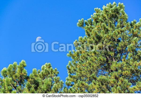 Pine Tree Moon - csp35002852