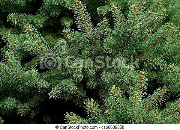 Pine tree - csp0639358