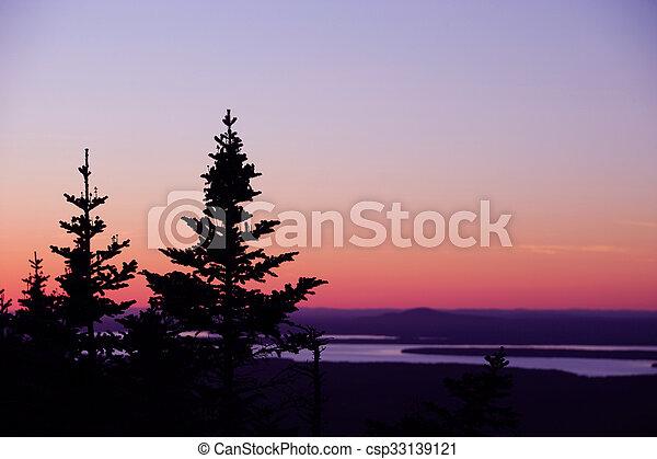 pine tree silhouette against twilig - csp33139121