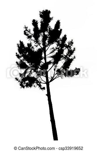 pine tree silhouette on white background - csp33919652
