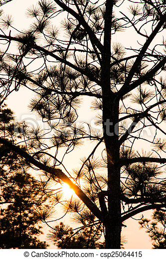 Pine tree silhouette - csp25064415