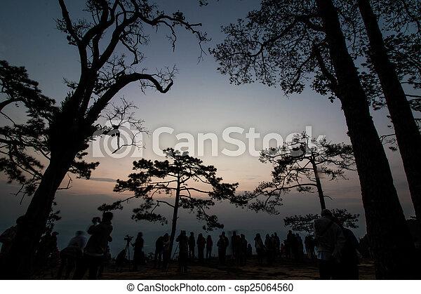 Pine tree silhouette - csp25064560