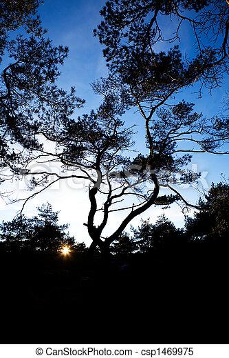 Pine Tree Silhouette - csp1469975