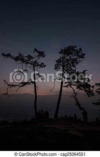 Pine tree silhouette - csp25064551