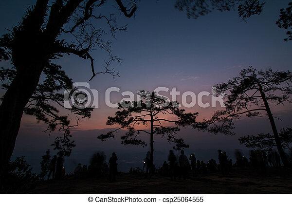 Pine tree silhouette - csp25064555