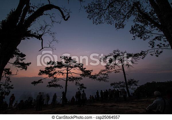 Pine tree silhouette - csp25064557