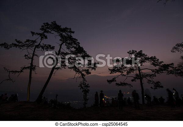 Pine tree silhouette - csp25064545