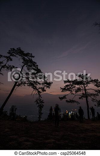 Pine tree silhouette - csp25064548