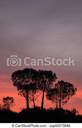 Pine Tree silhouette - csp42073846