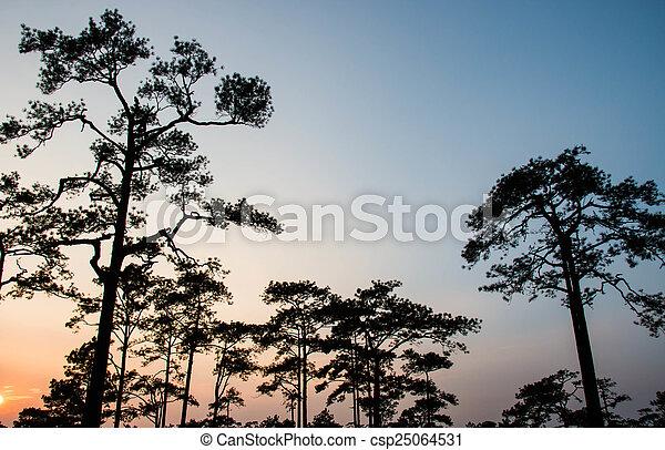 Pine tree silhouette - csp25064531
