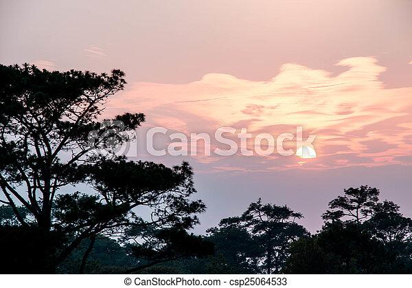 Pine tree silhouette - csp25064533