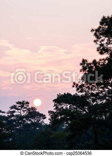 Pine tree silhouette - csp25064536