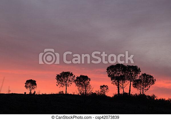 Pine Tree silhouette - csp42073839