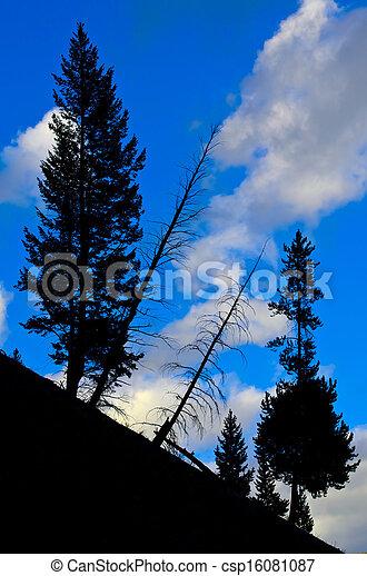 Pine Tree Silhouette Yellowstone National Park - csp16081087