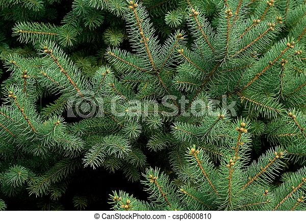 Pine tree - csp0600810