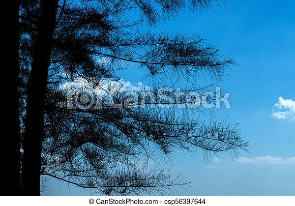 pine tree with blue sky - csp56397644
