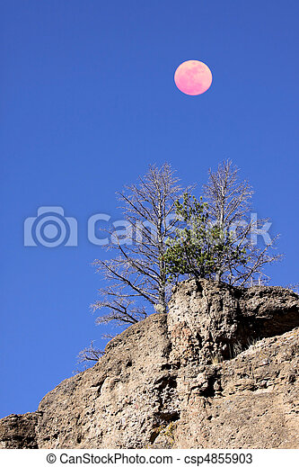 Pine trees and moon - csp4855903