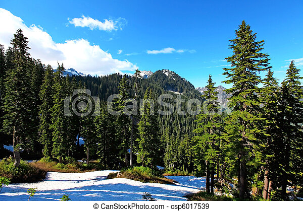 Pine trees and snow mountains - csp6017539